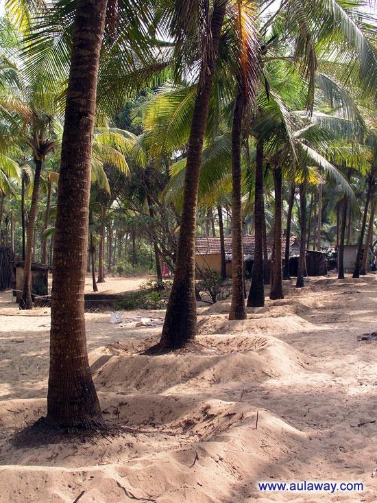 Долгая дорога в рай. Через тернии и пальмы.