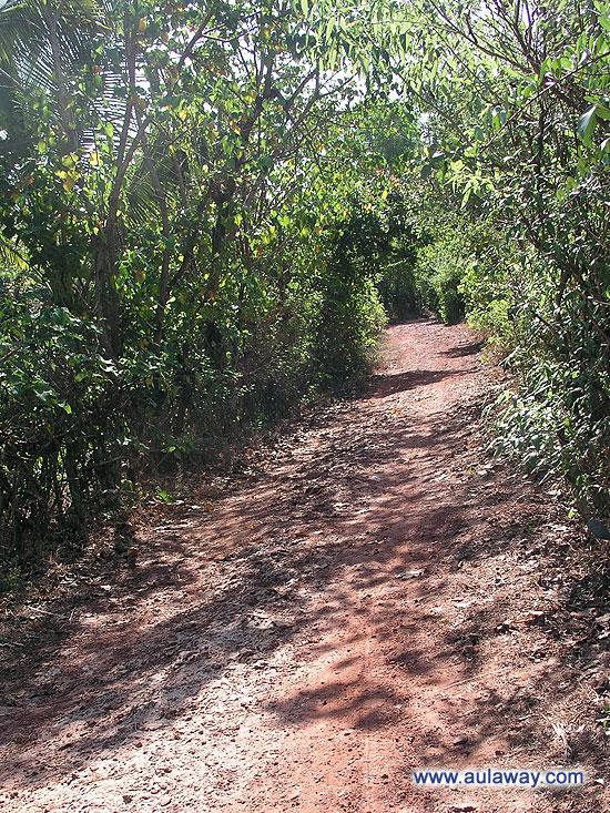 Чем дальше в лес, тем круче трасса ...