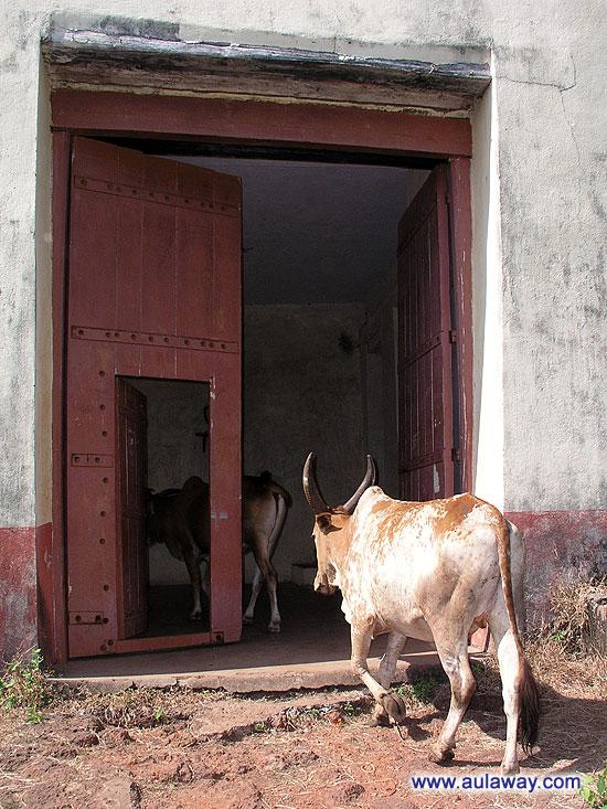 Fort Cabo De Rama. Enter. (Форт Кабо де Рама - Вход)