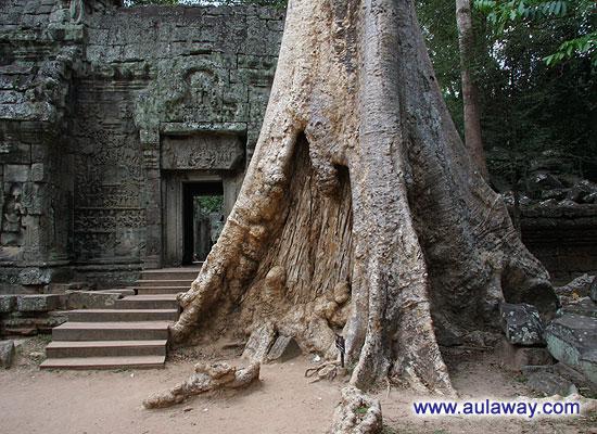 Анкор Трат. Дерево. Обычное вроде такое дерево.