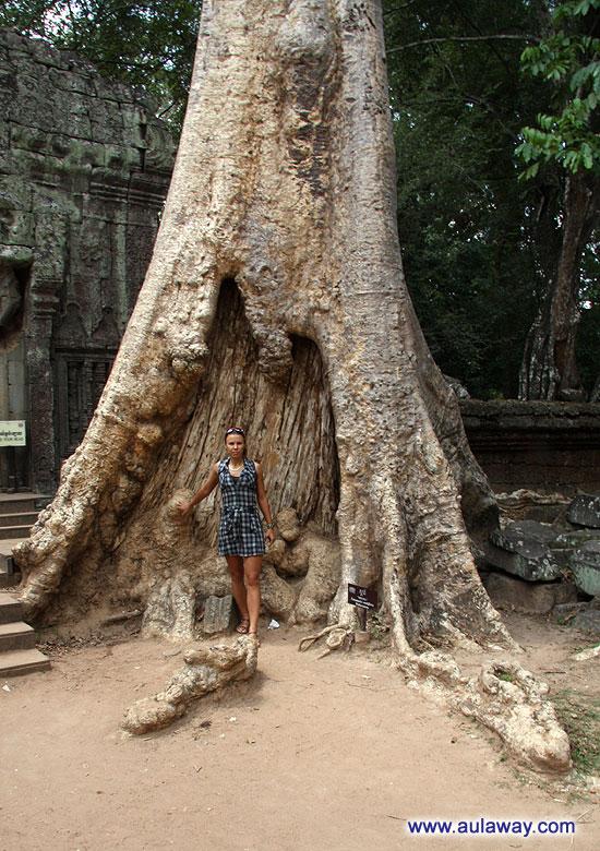 Анкор Трат. На фоне обычного дерева. Сколько ж ему лет???
