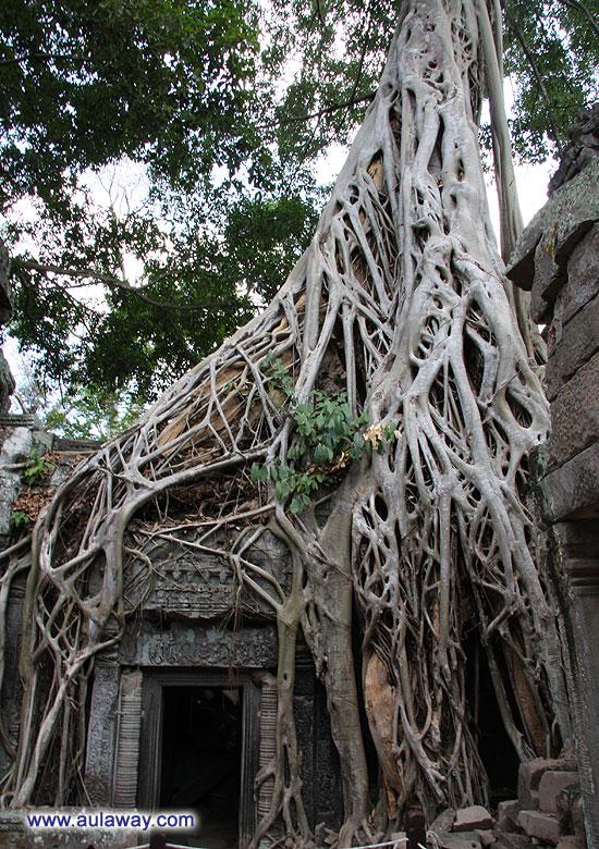 Анкор Трат. Под корнями.