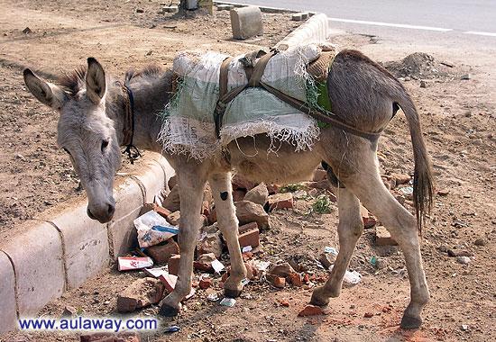 """Национальный парк. История """"Один день в Дели"""". Осел"""