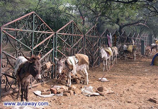 """Национальный парк. История """"Один день в Дели"""". Ослы."""