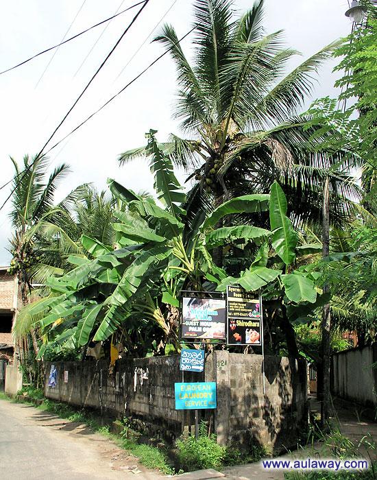 Все та же дорога по Шри-Ланке