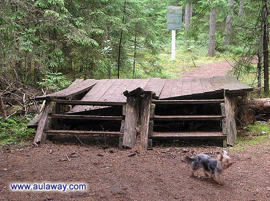 Собаку тут самое раздолье, бегает, обнюхивает все подряд, лает, вертится волчком.