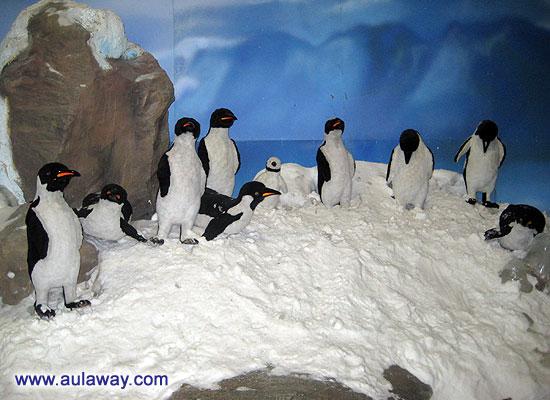 Тайский холодильник. Dream World. А еще пингвины, типа местных бездомных кошек, ходят кругами и попрошайничают еду.