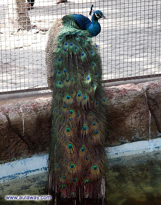 Nong Noch. Нунг Нуч Тропический сад: Зоопарк.