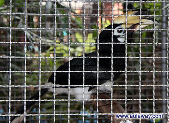 Nong Noch. Нунг Нуч Тропический сад: Птицы.