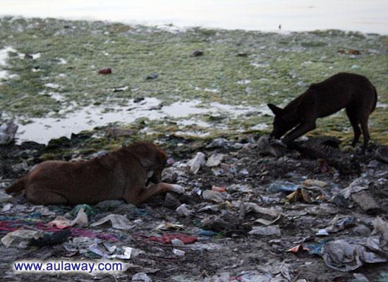 Тело размоет водой, кости обглодают собаки ...