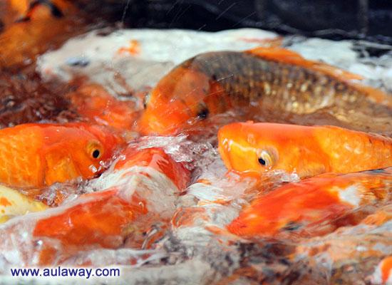 Кормлю рыбок