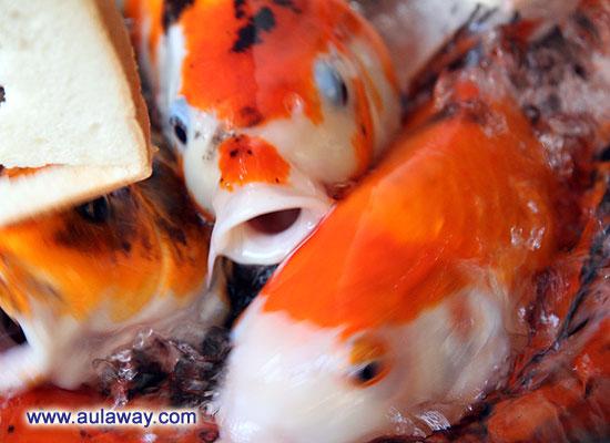 Рыбки ... погладить, за ушком почесать :)