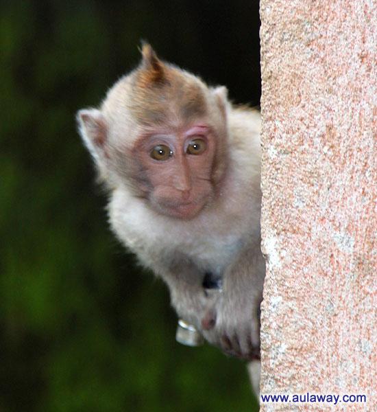 Bali - Monkey Temple. Бали - Храм обезьян