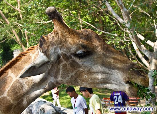 Khao Kheow Open Zoo. Кхао кхео зоопарк.