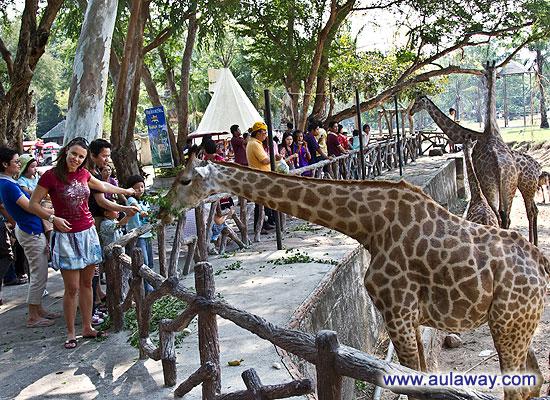 Кхао Кхео тайский зоопарк. Khao Kheow Open Zoo.