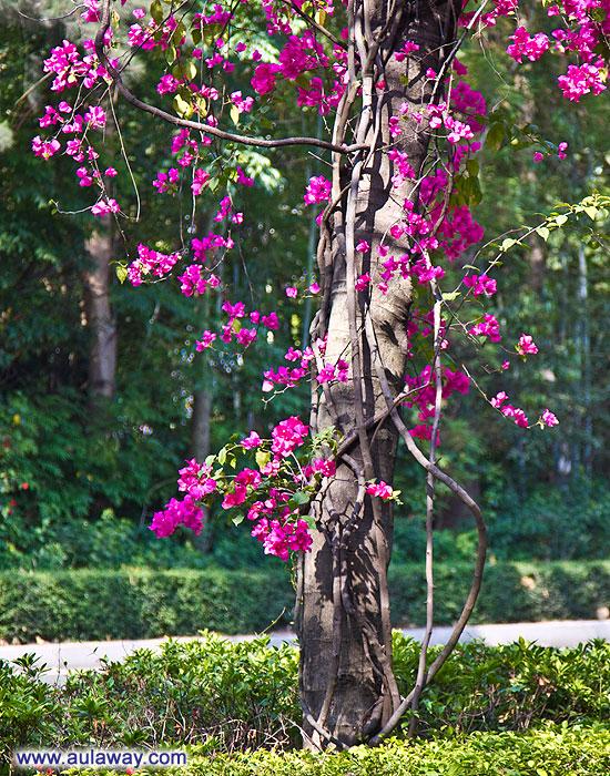 Короткие рассказы. Сакура цветет.