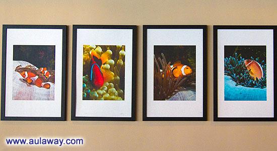 И рыбки, в ядовитых кустах сфотографированные качественной камерой на стене ресторана.