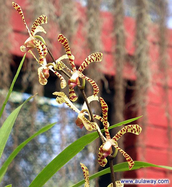 Шри-Ланка. В парке орхидей.