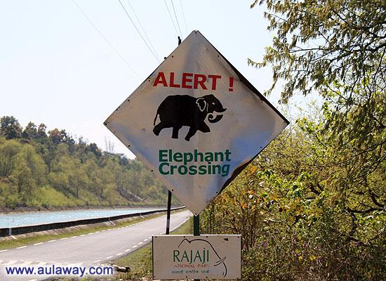 5 секретов хорошего настроения. Осторожно, на дороге слон.