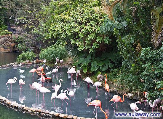 Экзотические птицы Гонконга.