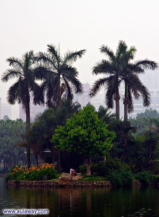 Красота китайских парков.