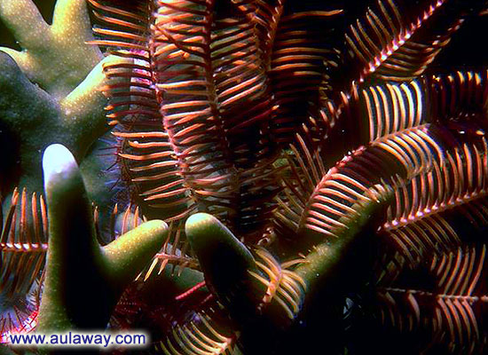 Кораллы моря