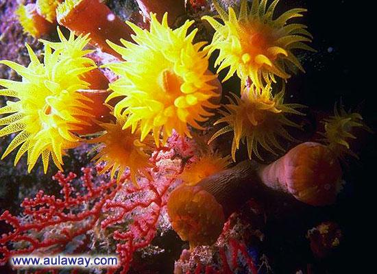 Подводные цветы.
