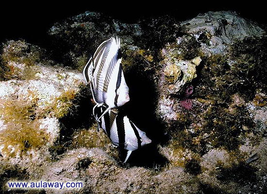 Морские рыбки.