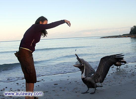 Приручаю гусей.