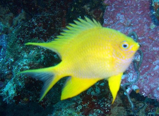 Подводный мир Филлипин