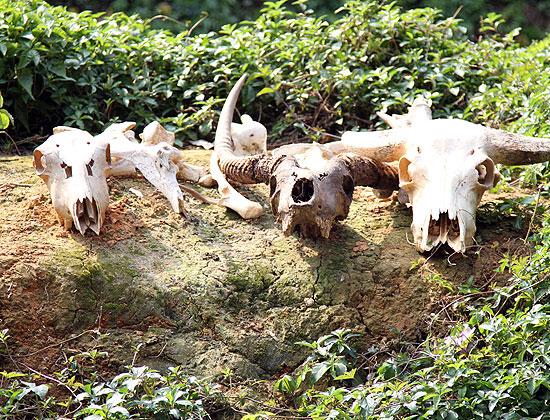 Сафари в Гуанчжоу. Фотографии.