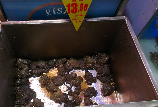 Китайские лягушки в магазинах